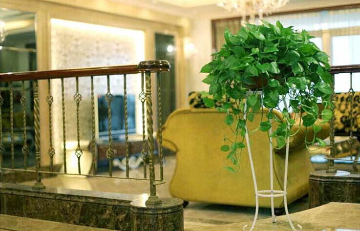 客厅植物摆放风水 植物摆放的禁忌