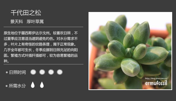 150种常见多肉植物图鉴 最全面的多肉植物图片及名称